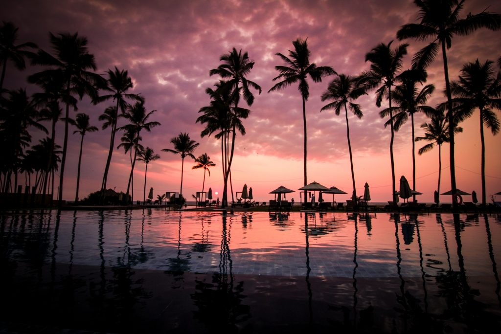 Palm trees silhouetted against a dusky, purple evening